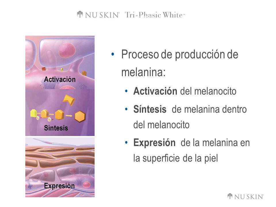 Proceso de producción de melanina:
