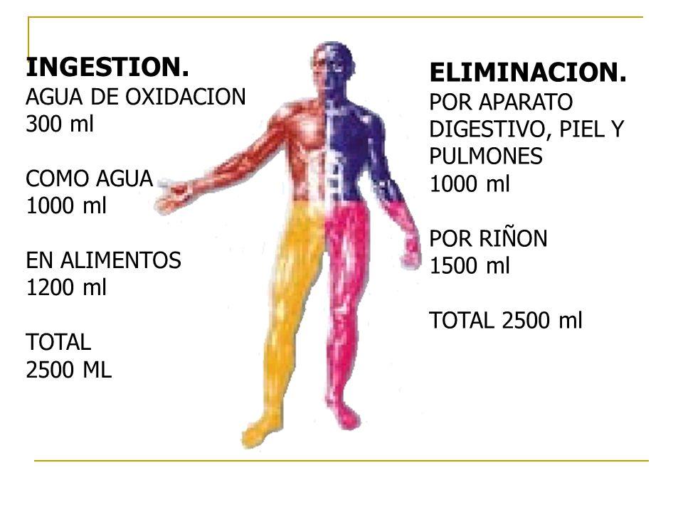 INGESTION. ELIMINACION. AGUA DE OXIDACION