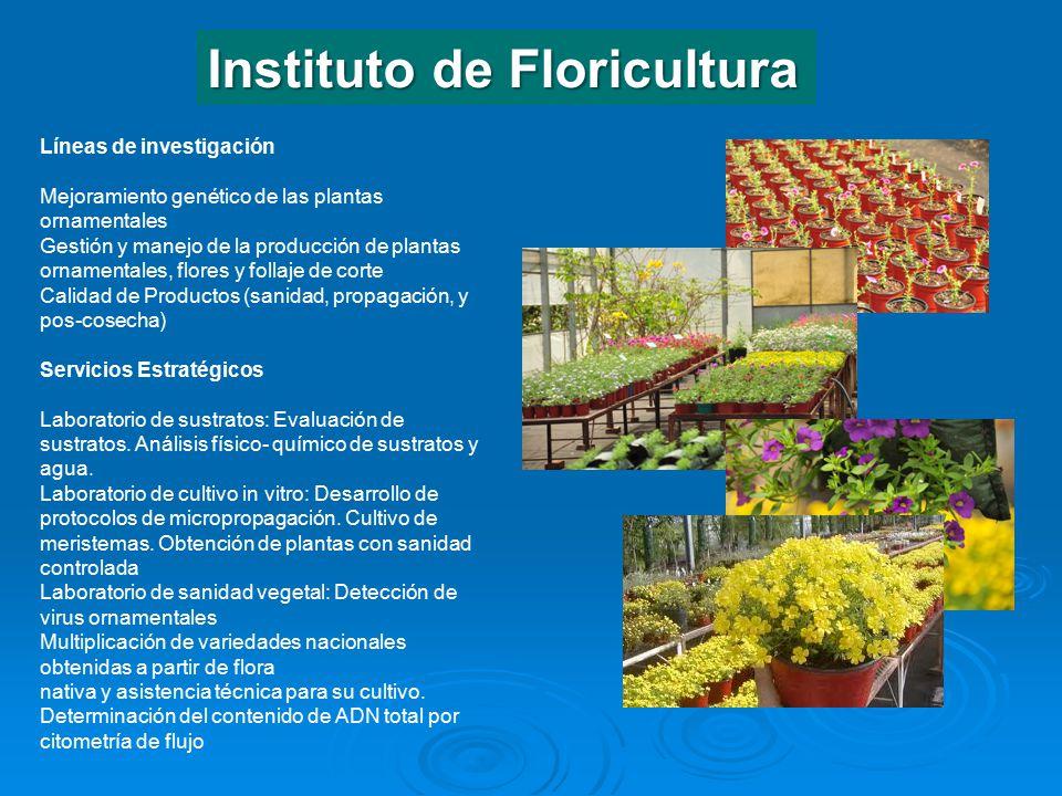 Centro de investigaci n de recursos naturales cirn ppt for Proyecto de investigacion de plantas ornamentales