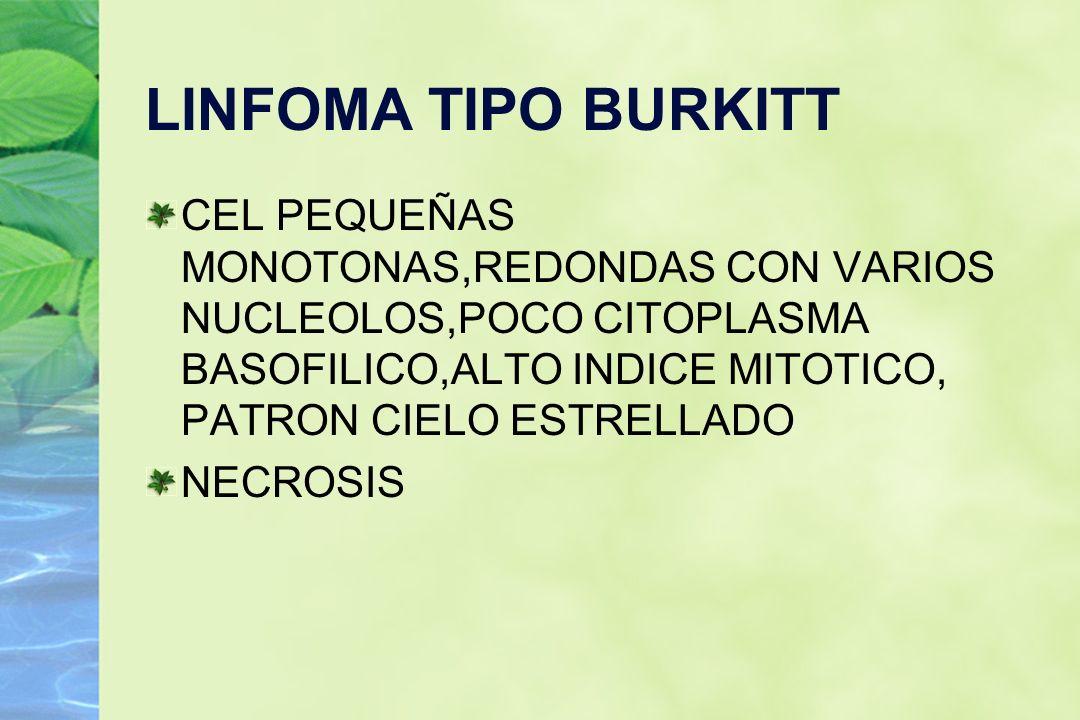LINFOMA TIPO BURKITT CEL PEQUEÑAS MONOTONAS,REDONDAS CON VARIOS NUCLEOLOS,POCO CITOPLASMA BASOFILICO,ALTO INDICE MITOTICO, PATRON CIELO ESTRELLADO.