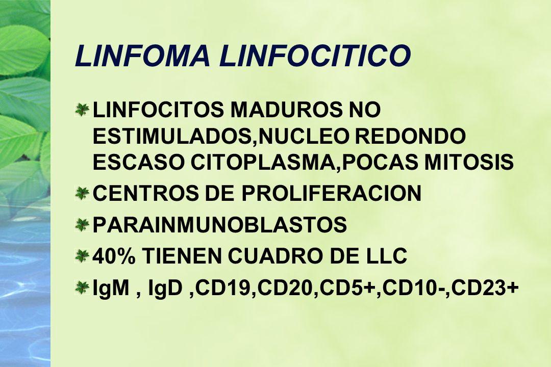 LINFOMA LINFOCITICO LINFOCITOS MADUROS NO ESTIMULADOS,NUCLEO REDONDO ESCASO CITOPLASMA,POCAS MITOSIS.
