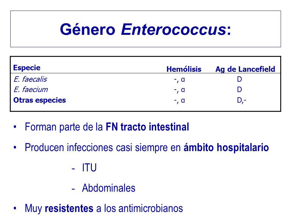 Género Enterococcus: Forman parte de la FN tracto intestinal