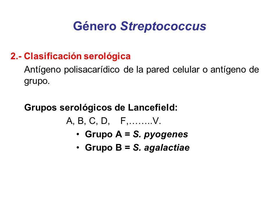 Género Streptococcus 2.- Clasificación serológica