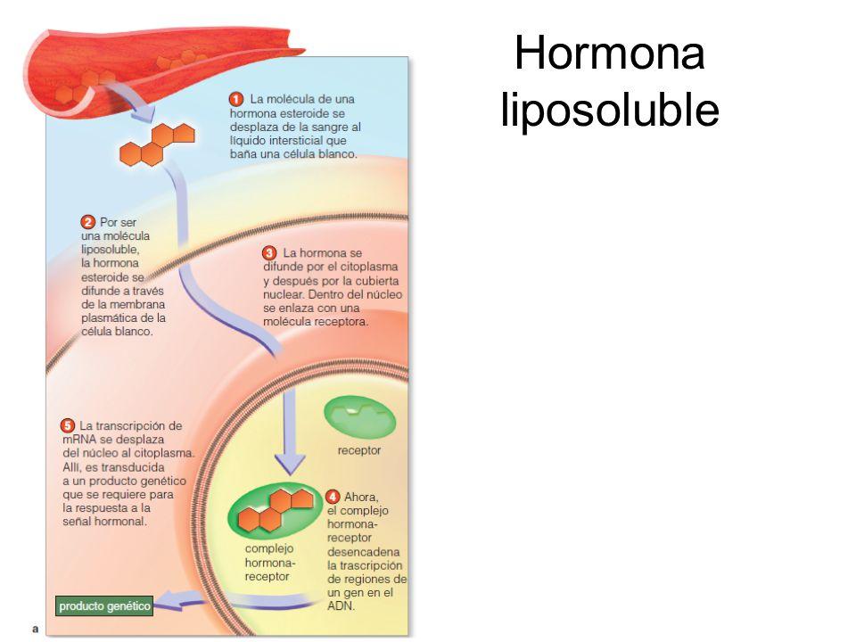 Hormona liposoluble