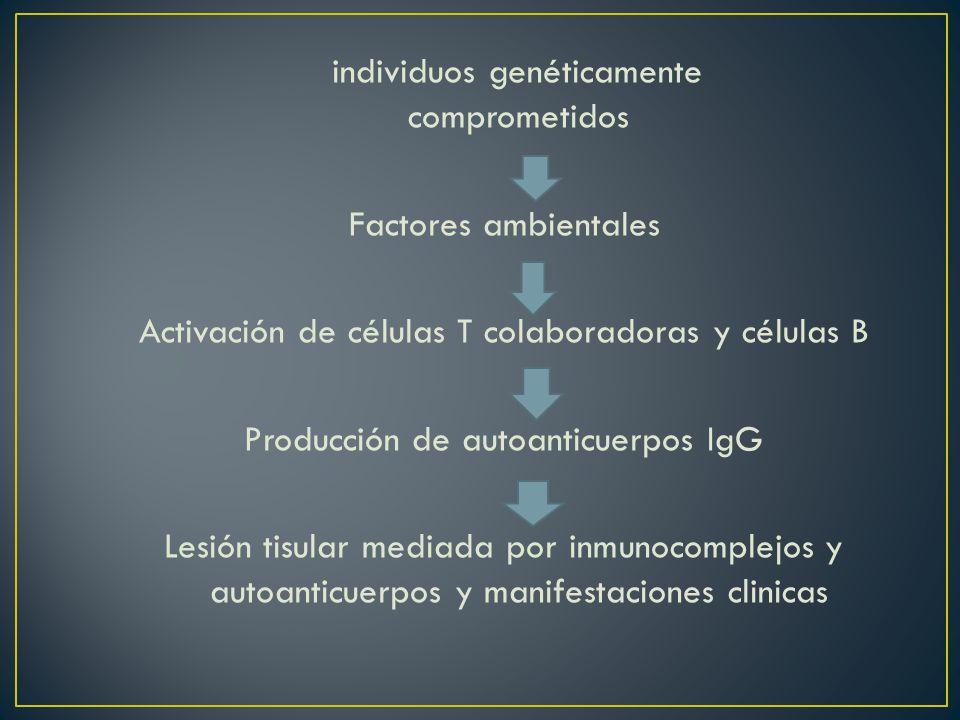 Activación de células T colaboradoras y células B