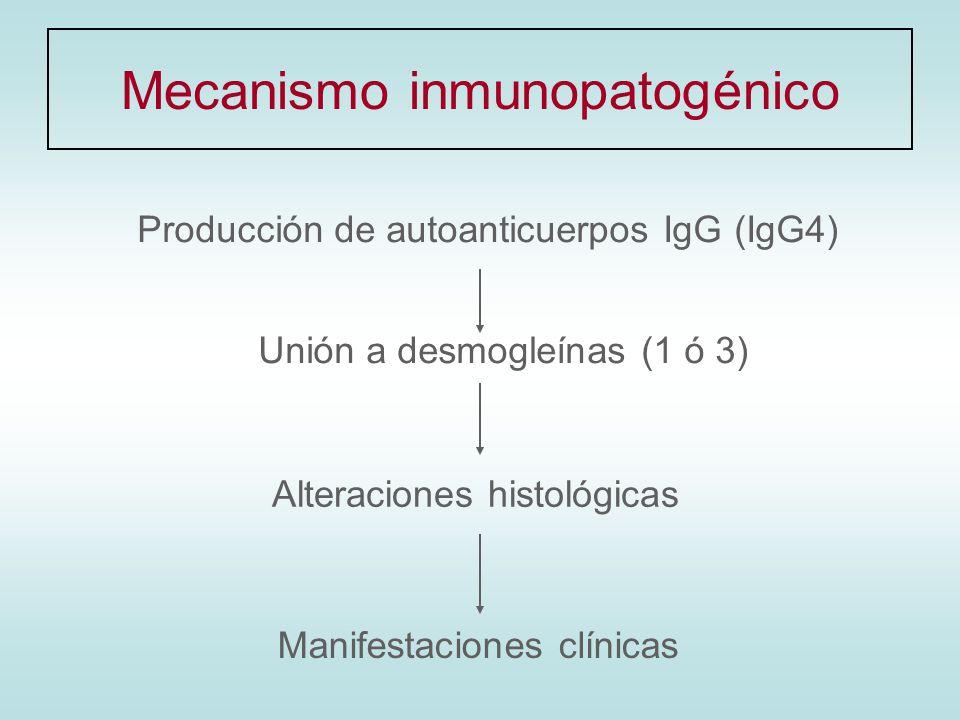 Mecanismo inmunopatogénico
