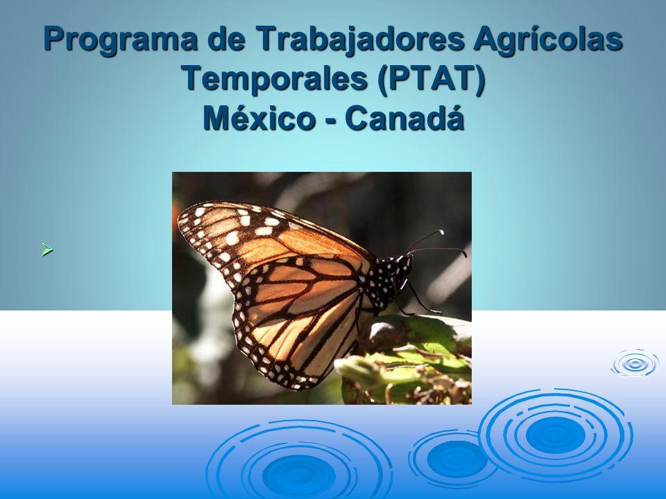 Programa de Trabajadores Agrícolas Temporales (PTAT) México - Canadá