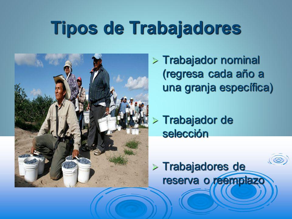 Tipos de Trabajadores Trabajador nominal (regresa cada año a una granja específica) Trabajador de selección.
