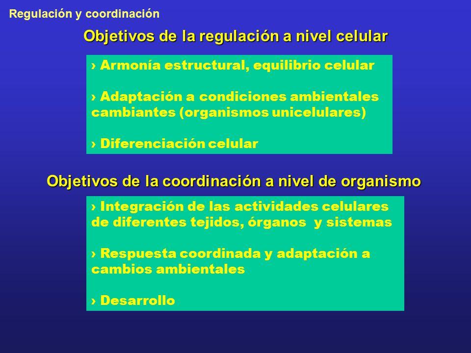 Objetivos de la regulación a nivel celular