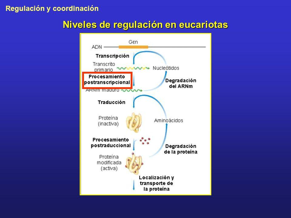 Niveles de regulación en eucariotas