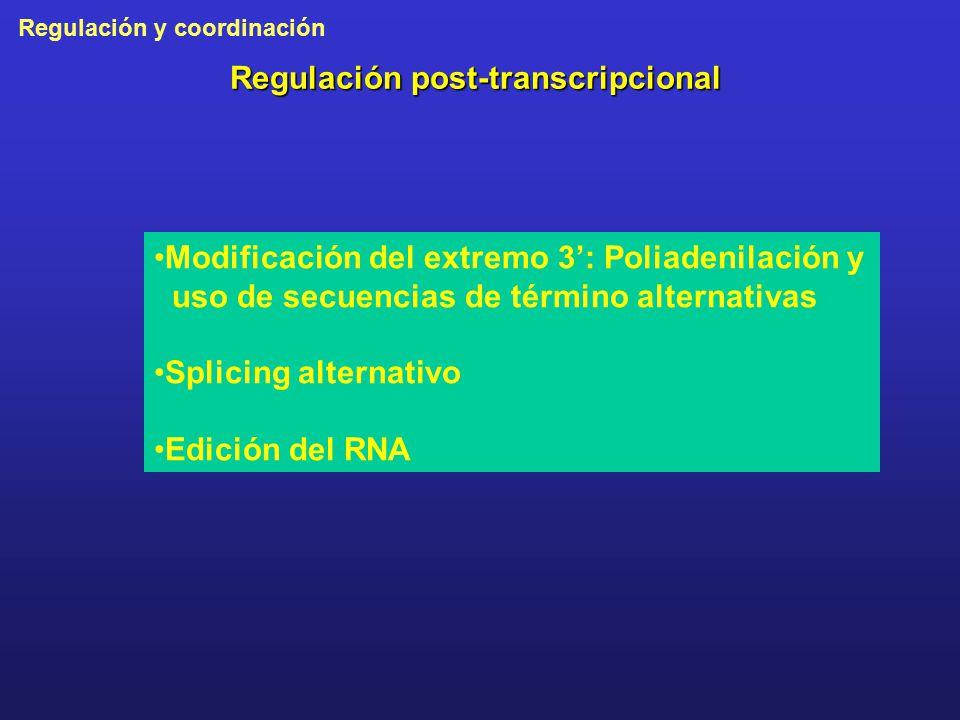 Regulación post-transcripcional