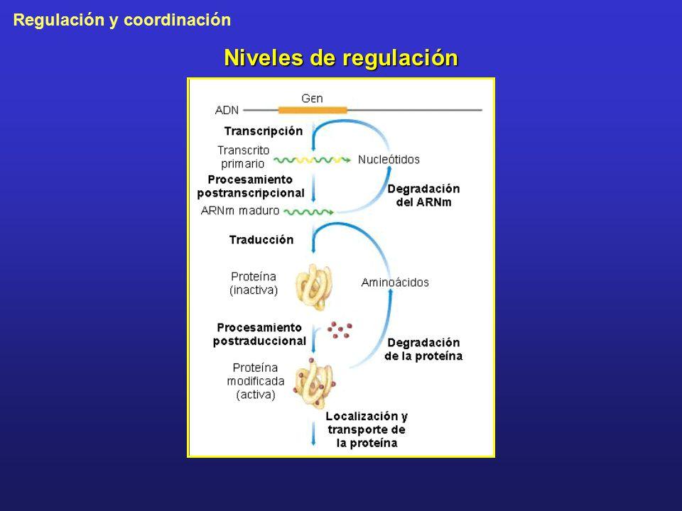 Niveles de regulación
