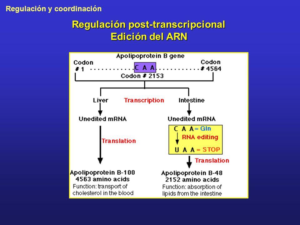 Regulación post-transcripcional Edición del ARN