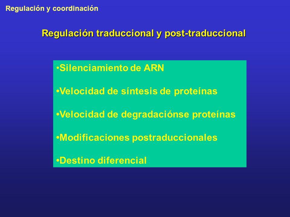 Regulación traduccional y post-traduccional