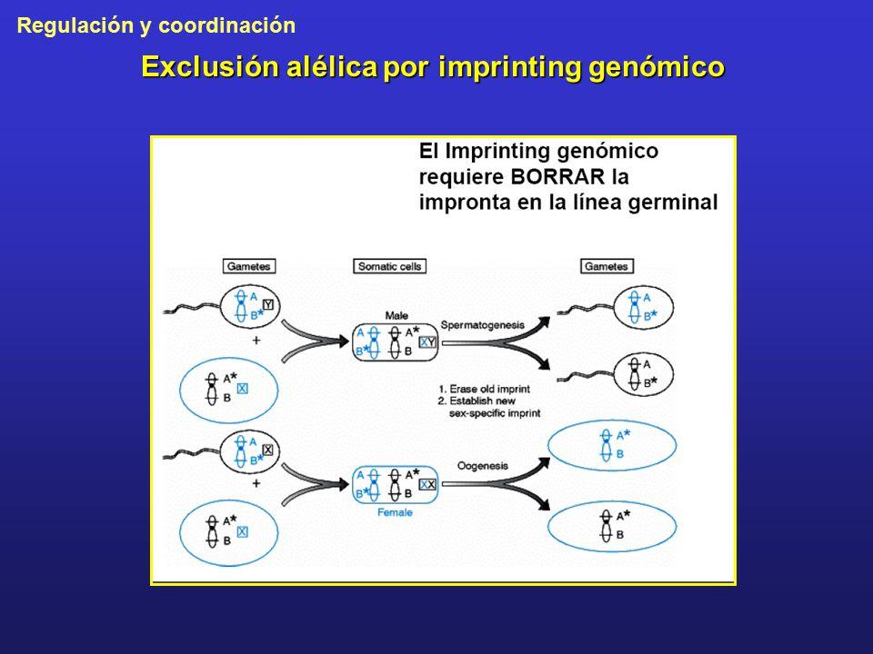 Exclusión alélica por imprinting genómico