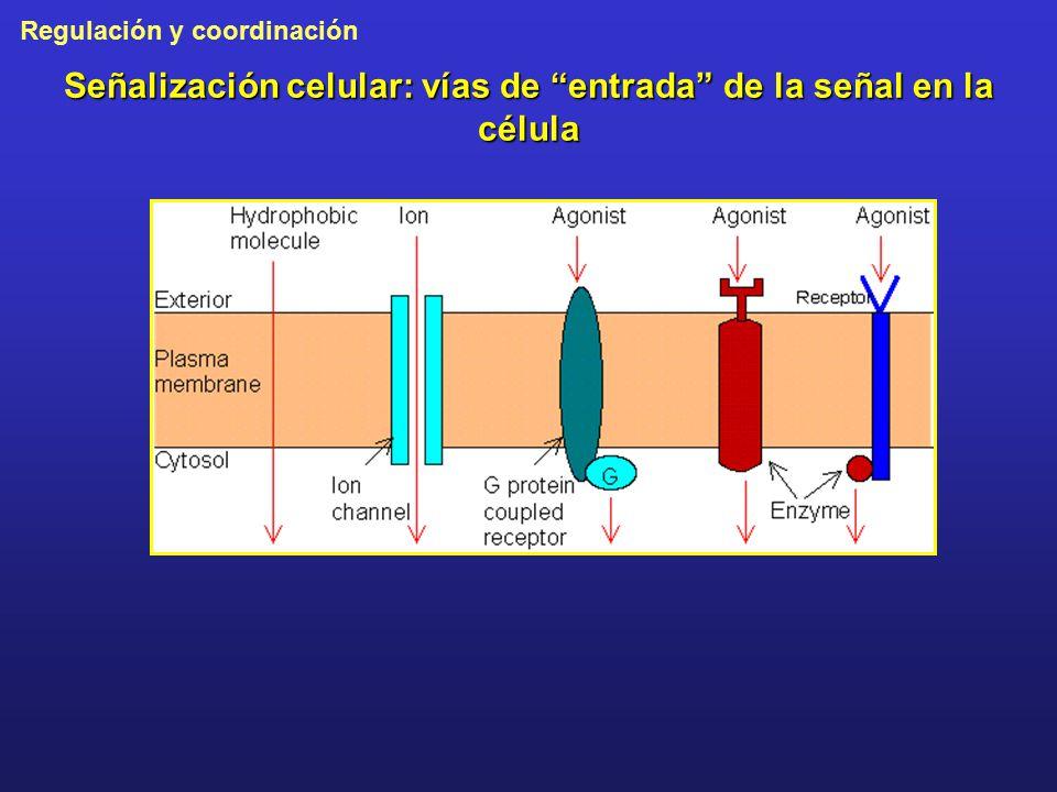 Señalización celular: vías de entrada de la señal en la célula