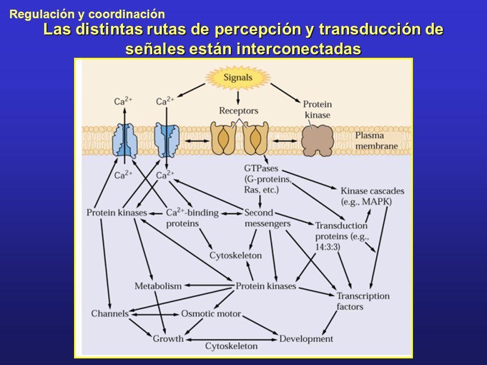 Las distintas rutas de percepción y transducción de señales están interconectadas
