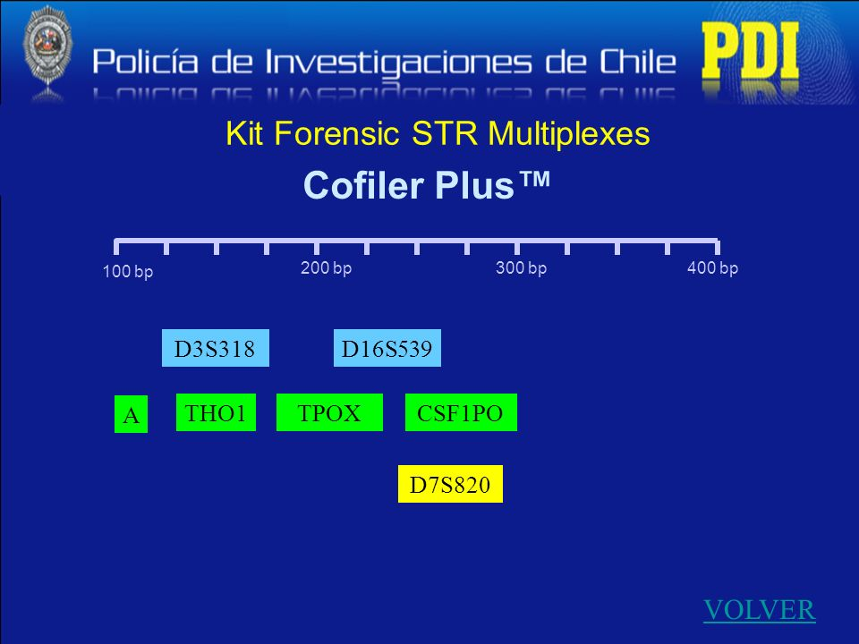 Kit Forensic STR Multiplexes