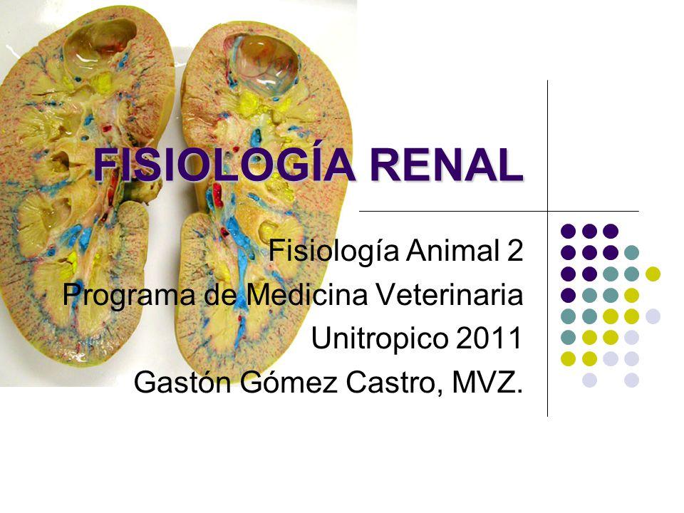 FISIOLOGÍA RENAL Fisiología Animal 2 Programa de Medicina ...