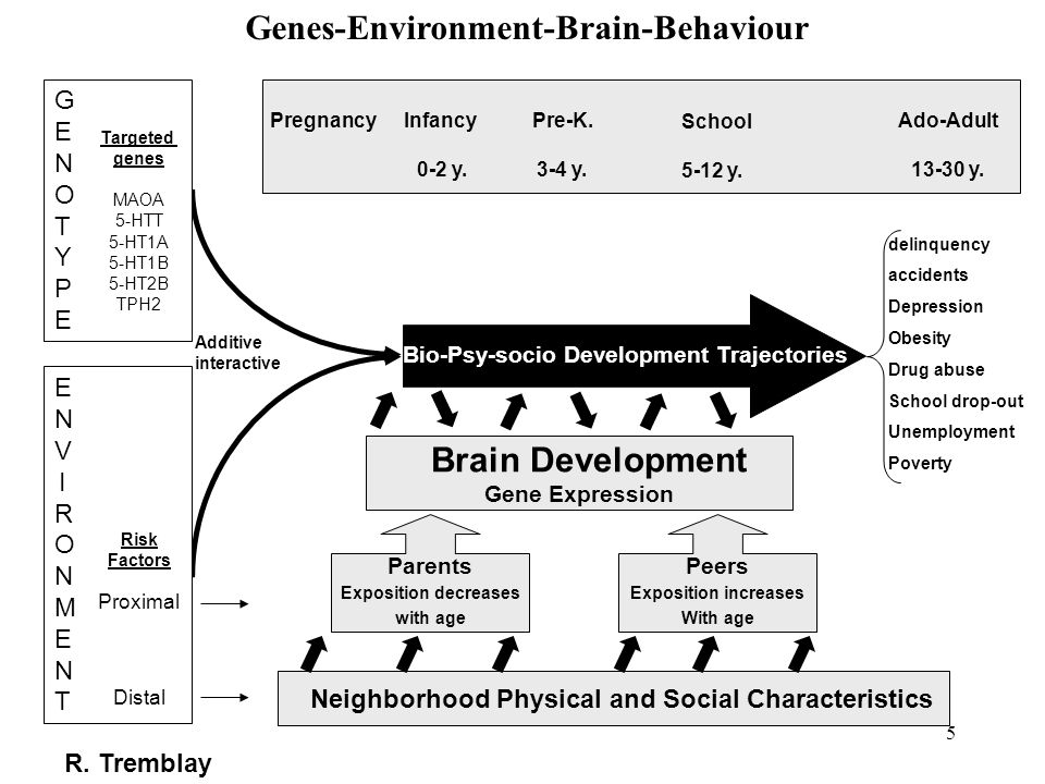 Genes-Environment-Brain-Behaviour