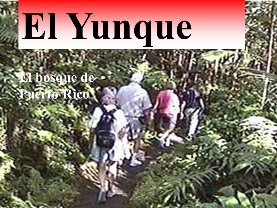 El Yunque El bosque de Puerto Rico