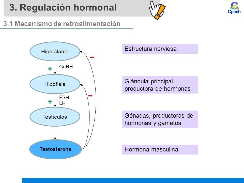 Armario Indoor Bogota ~ Aparato reproductor masculino, hormonas y sexualidad ppt video online descargar