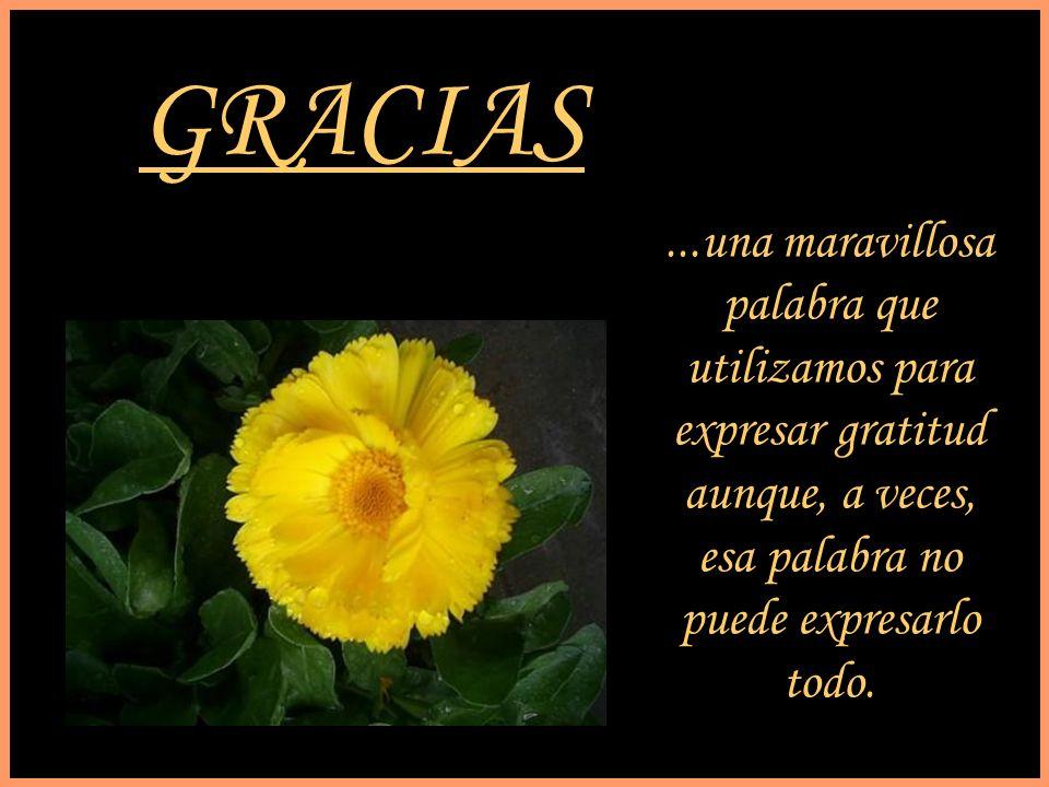 GRACIAS ...una maravillosa palabra que utilizamos para expresar gratitud.