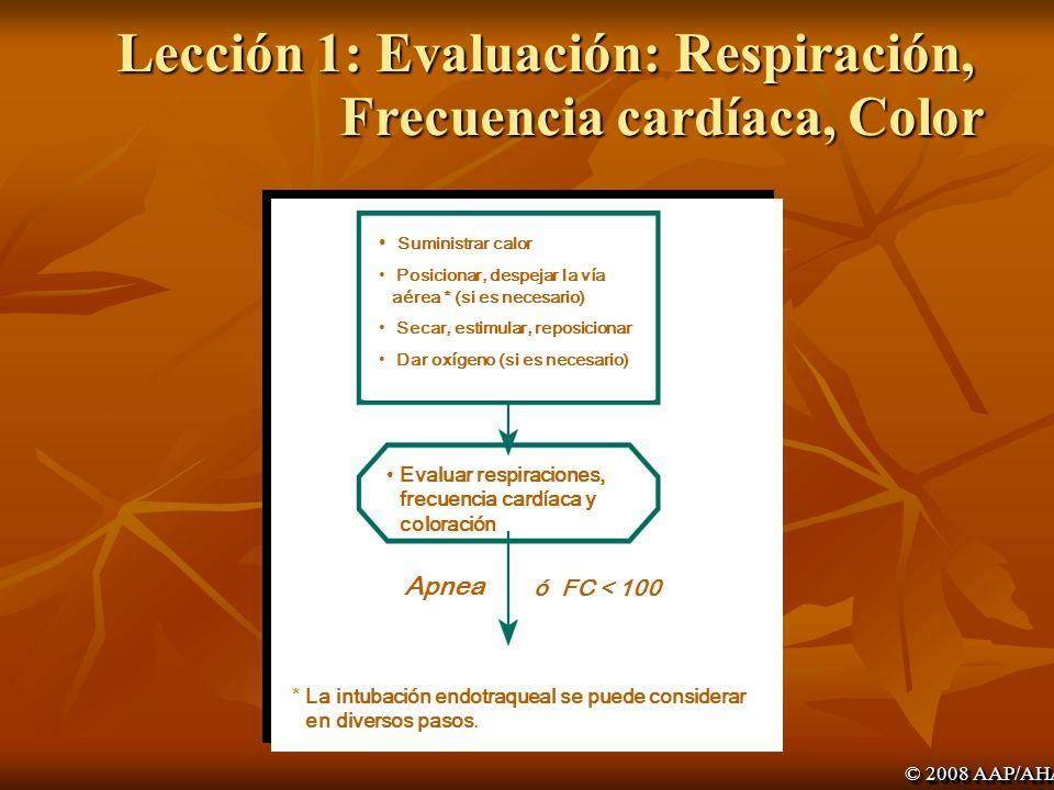 Lección 1: Evaluación: Respiración, Frecuencia cardíaca, Color