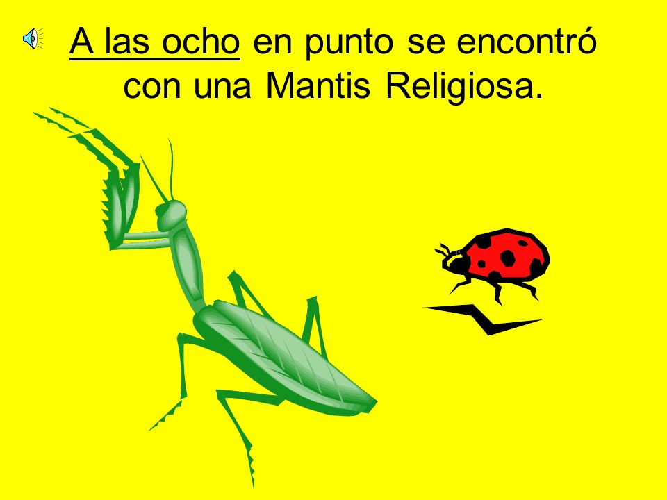 A las ocho en punto se encontró con una Mantis Religiosa.