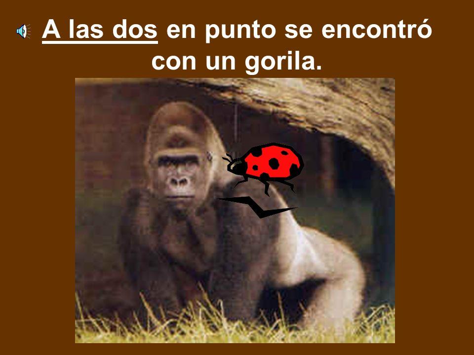 A las dos en punto se encontró con un gorila.