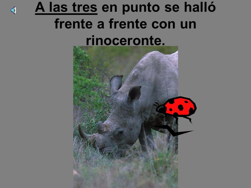 A las tres en punto se halló frente a frente con un rinoceronte.