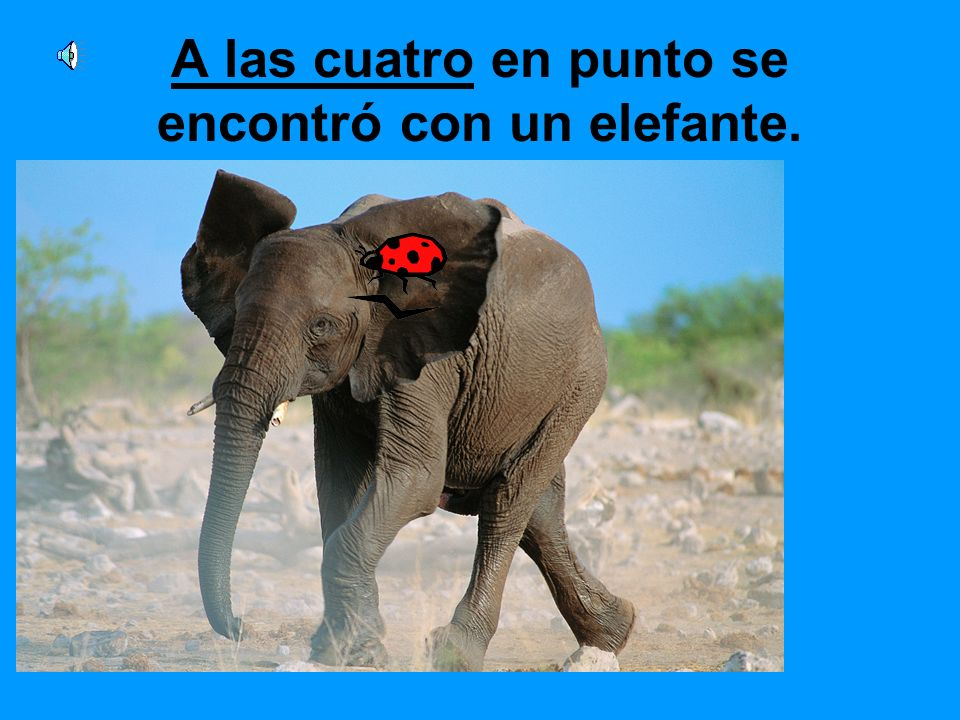 A las cuatro en punto se encontró con un elefante.