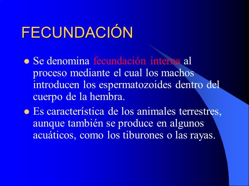 Reproducción animal.. - ppt descargar