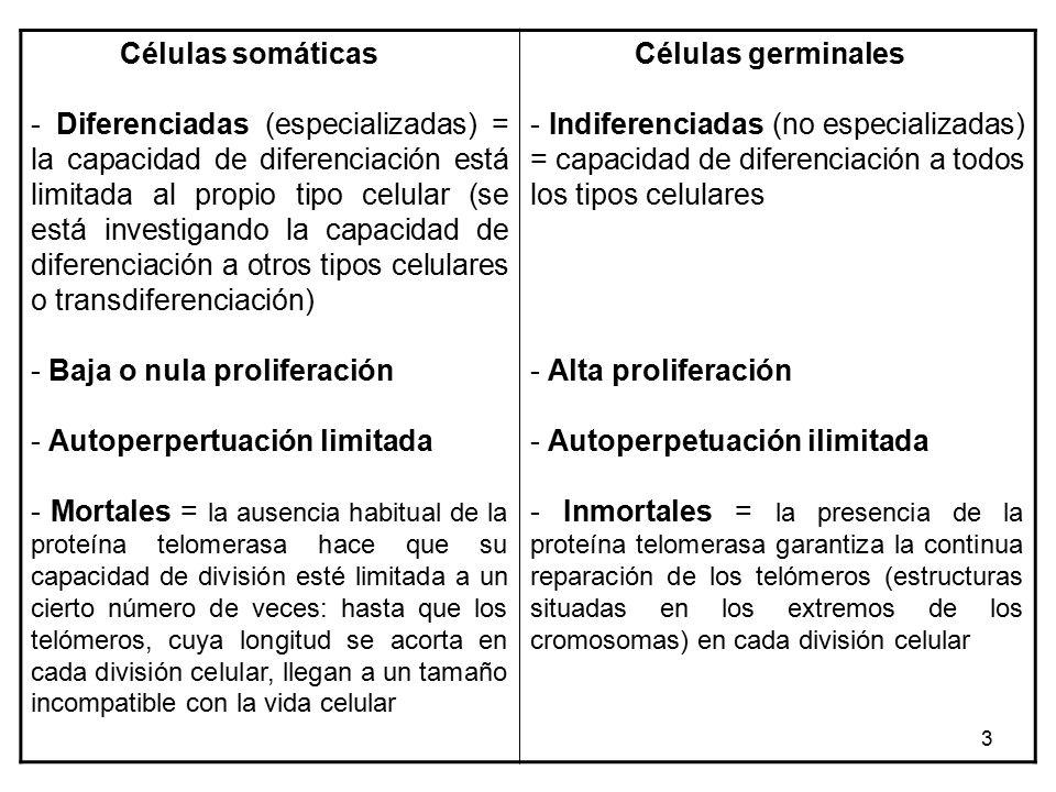 Células troncales humanas, células madre o estaminales (stem cells ...