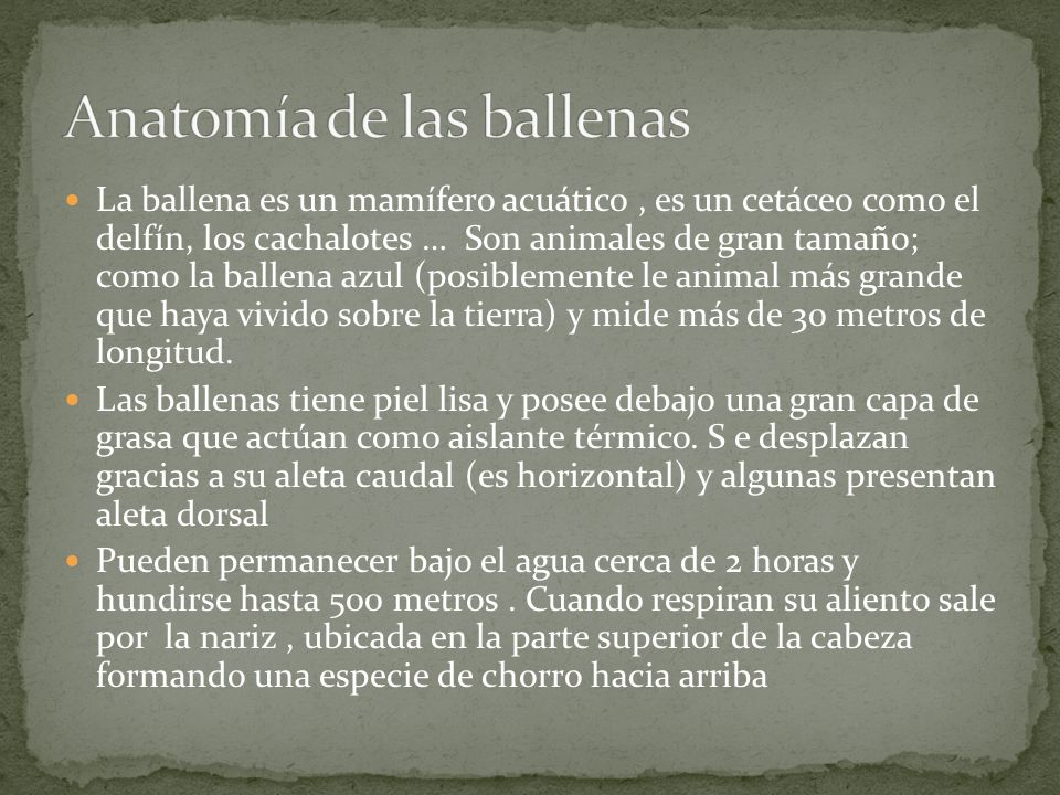 Encantador Ballenas Dork Anatomía Molde - Imágenes de Anatomía ...