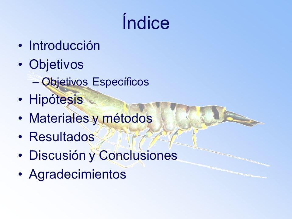 Índice Introducción Objetivos Hipótesis Materiales y métodos