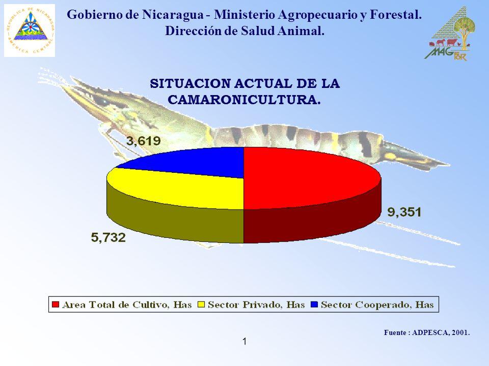 SITUACION ACTUAL DE LA CAMARONICULTURA.