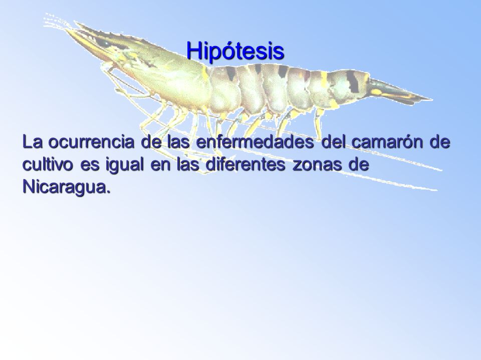 Hipótesis La ocurrencia de las enfermedades del camarón de cultivo es igual en las diferentes zonas de Nicaragua.