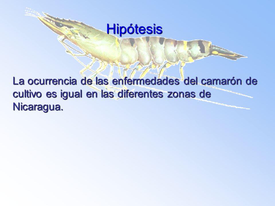 HipótesisLa ocurrencia de las enfermedades del camarón de cultivo es igual en las diferentes zonas de Nicaragua.