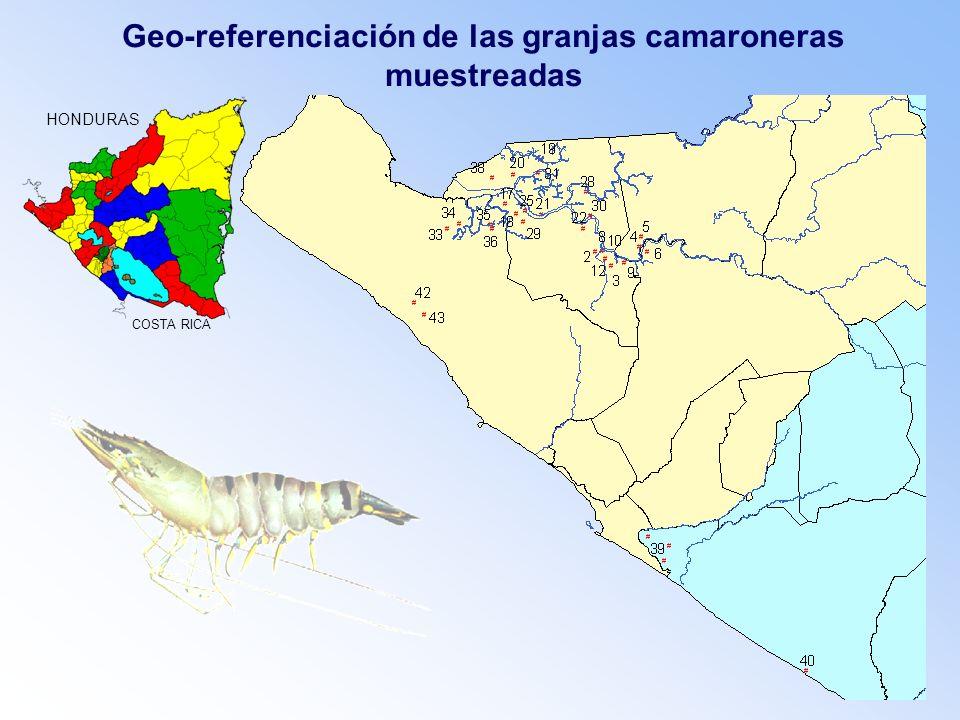 Geo-referenciación de las granjas camaroneras muestreadas