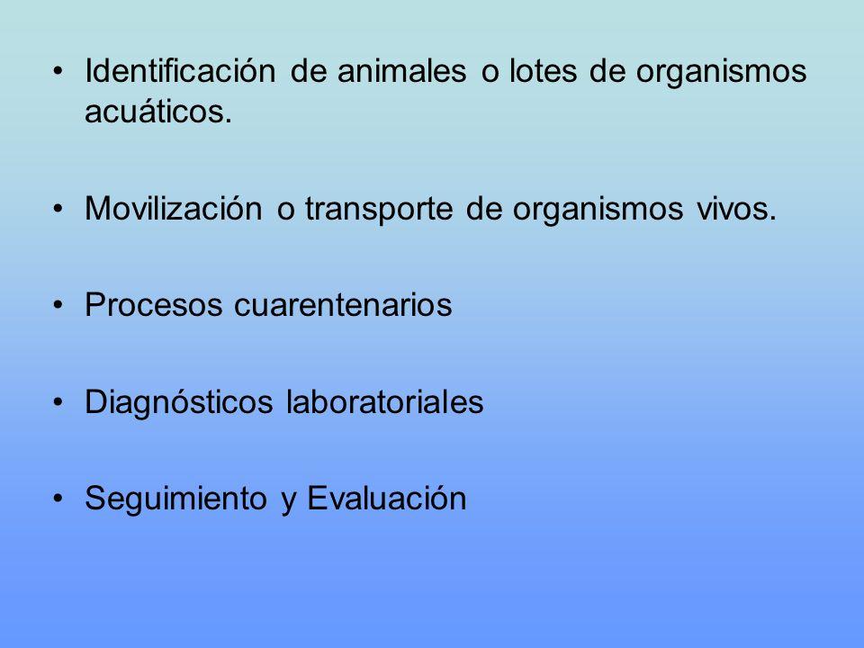 Identificación de animales o lotes de organismos acuáticos.