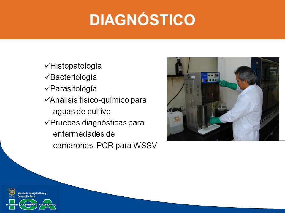 DIAGNÓSTICO Histopatología Bacteriología Parasitología