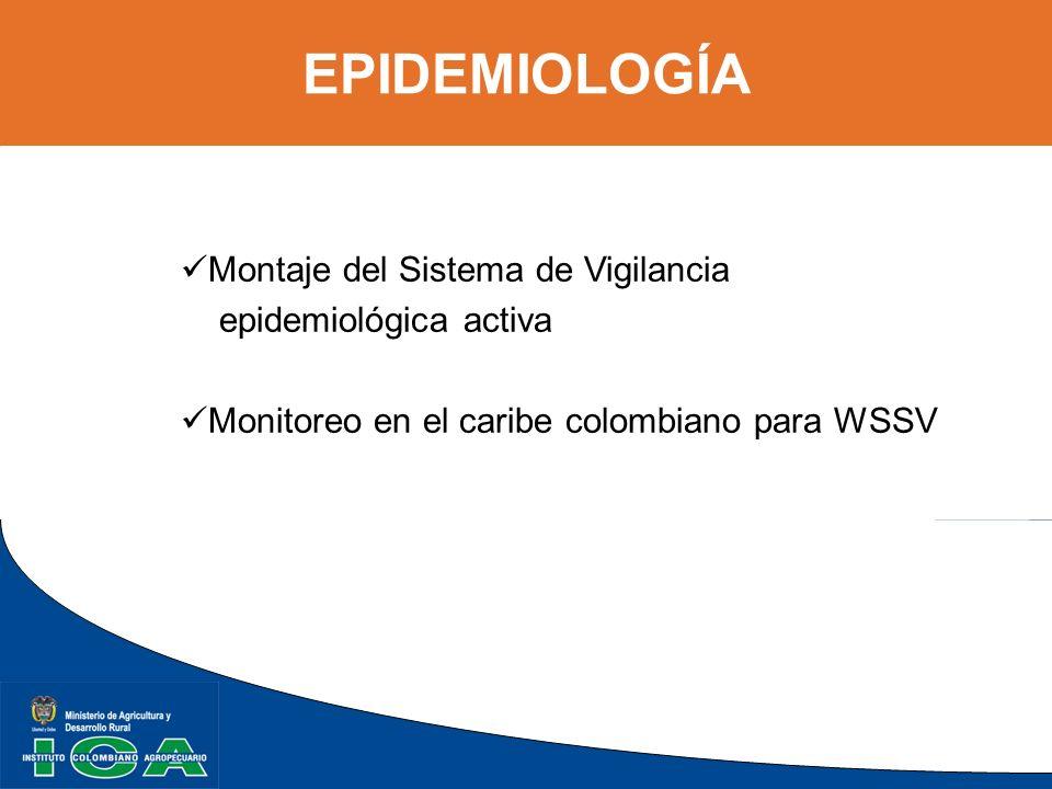 EPIDEMIOLOGÍA Montaje del Sistema de Vigilancia epidemiológica activa