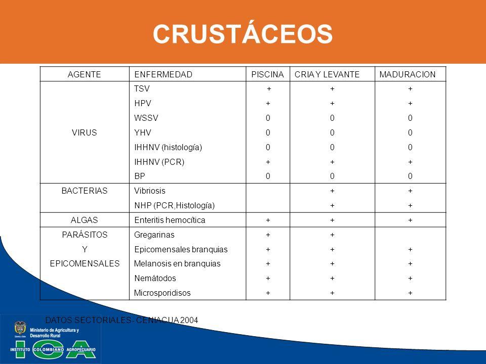CRUSTÁCEOS AGENTE ENFERMEDAD PISCINA CRIA Y LEVANTE MADURACION TSV +