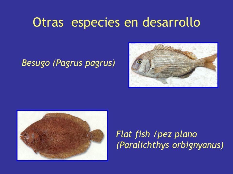 Otras especies en desarrollo