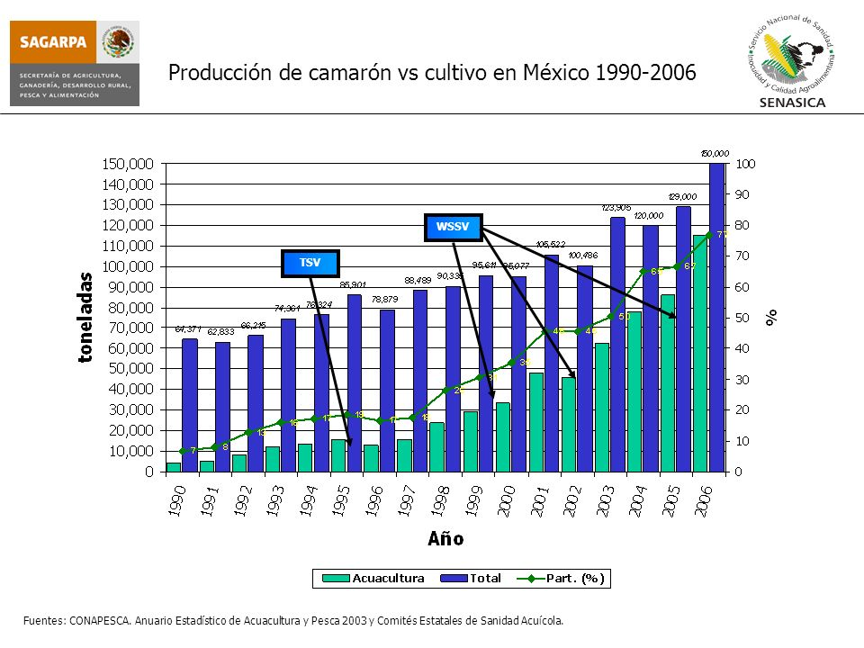 Producción de camarón vs cultivo en México 1990-2006