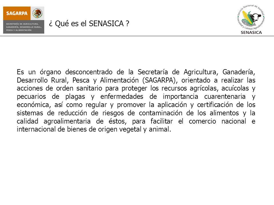 ¿ Qué es el SENASICA