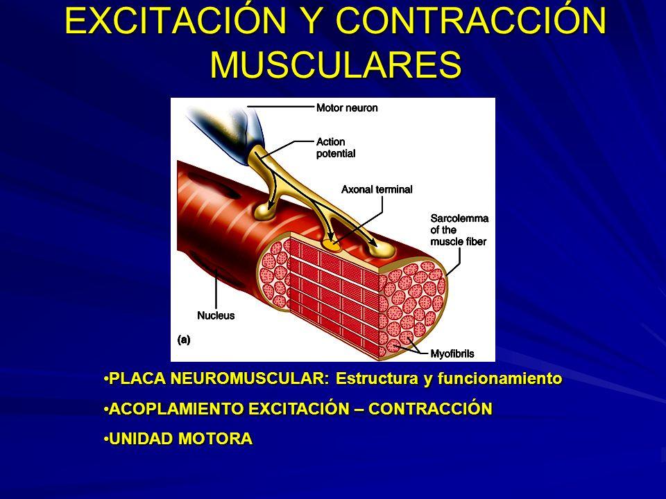 EXCITACIÓN Y CONTRACCIÓN MUSCULARES