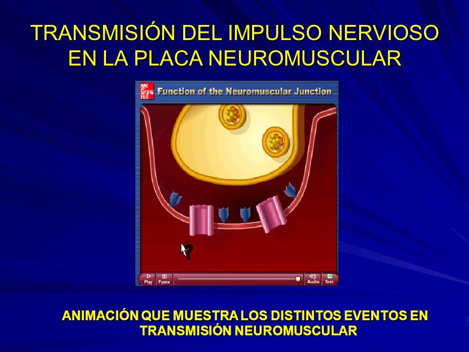 TRANSMISIÓN DEL IMPULSO NERVIOSO EN LA PLACA NEUROMUSCULAR
