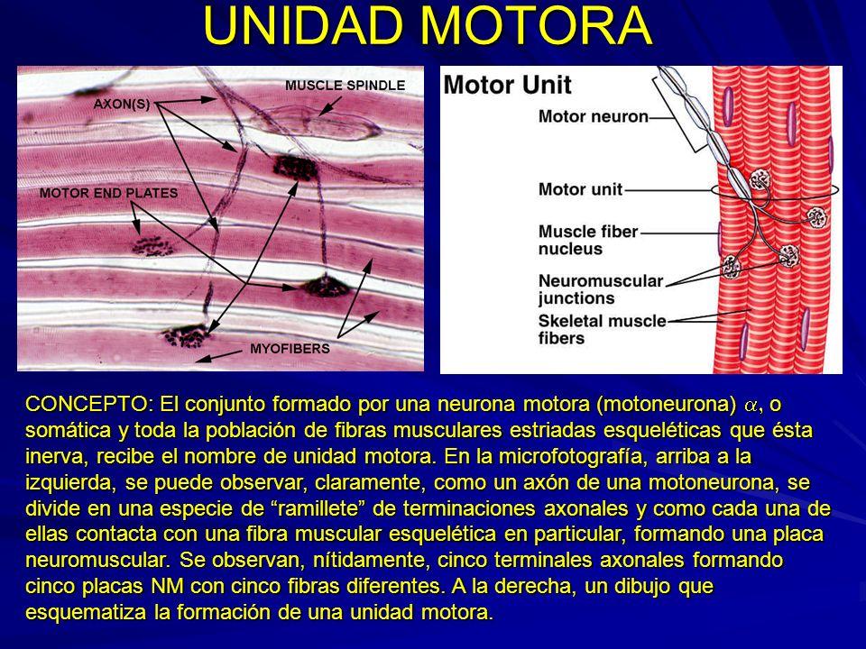 UNIDAD MOTORA